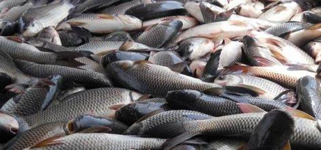 Livestock and Fish Breeding Work